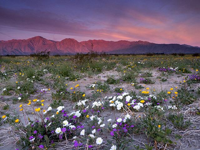 Weekend Escape Los Angeles anza_borrego_desert_state_park