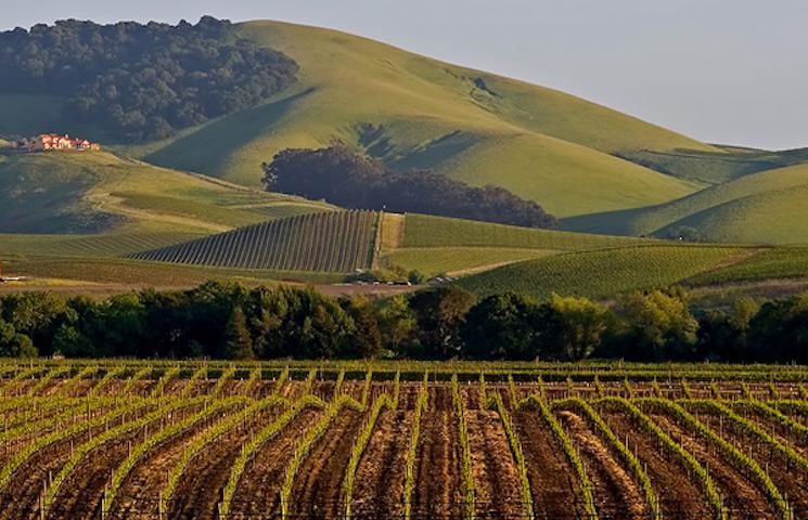 napa valley TOP 10 Must Visit Napa Valley wineries napa